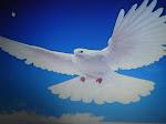 la paloma de la paz, que buena falta hace