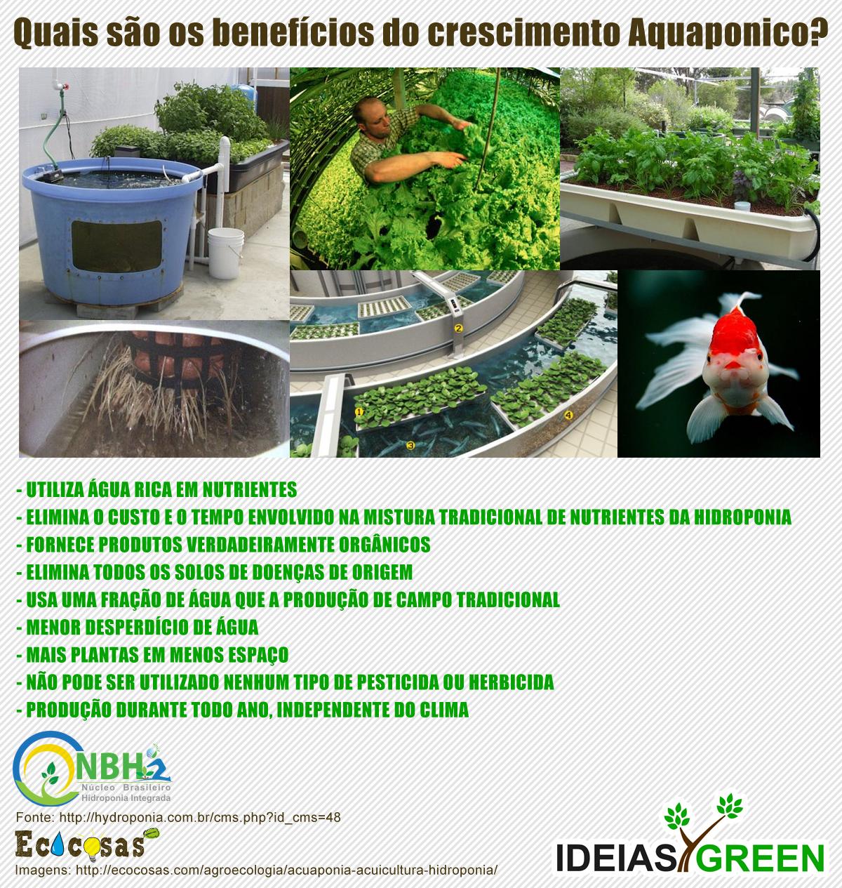 Benefícios do plantio aquaponico
