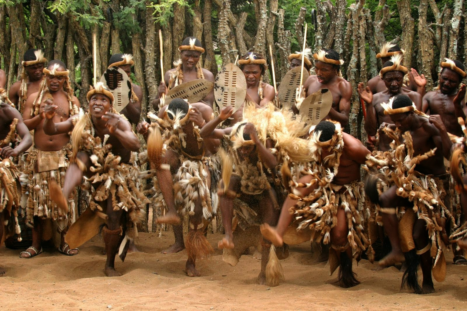 the zulu tribe Discover more about the zulu culture at thanda safari situated in the heart of the zulu kingdom of kzn learn about the history and traditions of the.