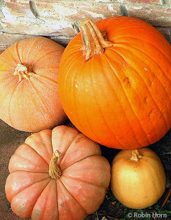 Four different types of pumpkins
