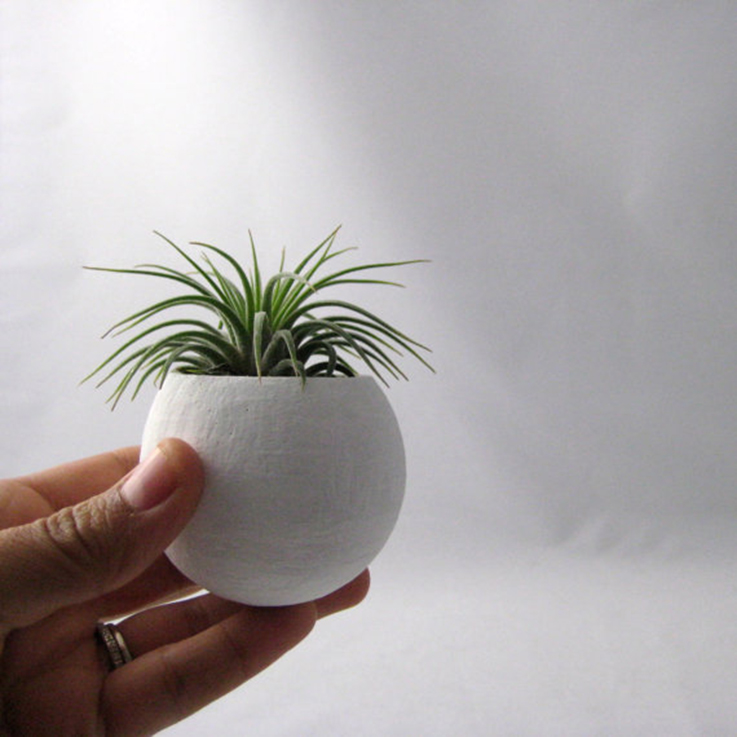 mini plant container