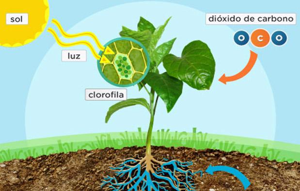 komponen penyusun yang saling melakukan interaksi 3 Interaksi dalam Ekosistem, Simbiosis Salah Satunya