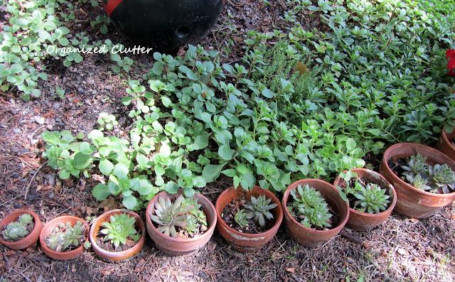 Terra Cotta Pot Garden Edging