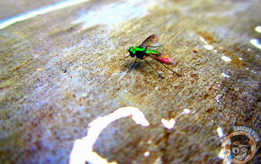 lalat hutan raya ir h djuanda