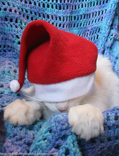 Very funny Christmas cat.