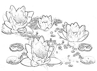 Lotus Flower Sketch