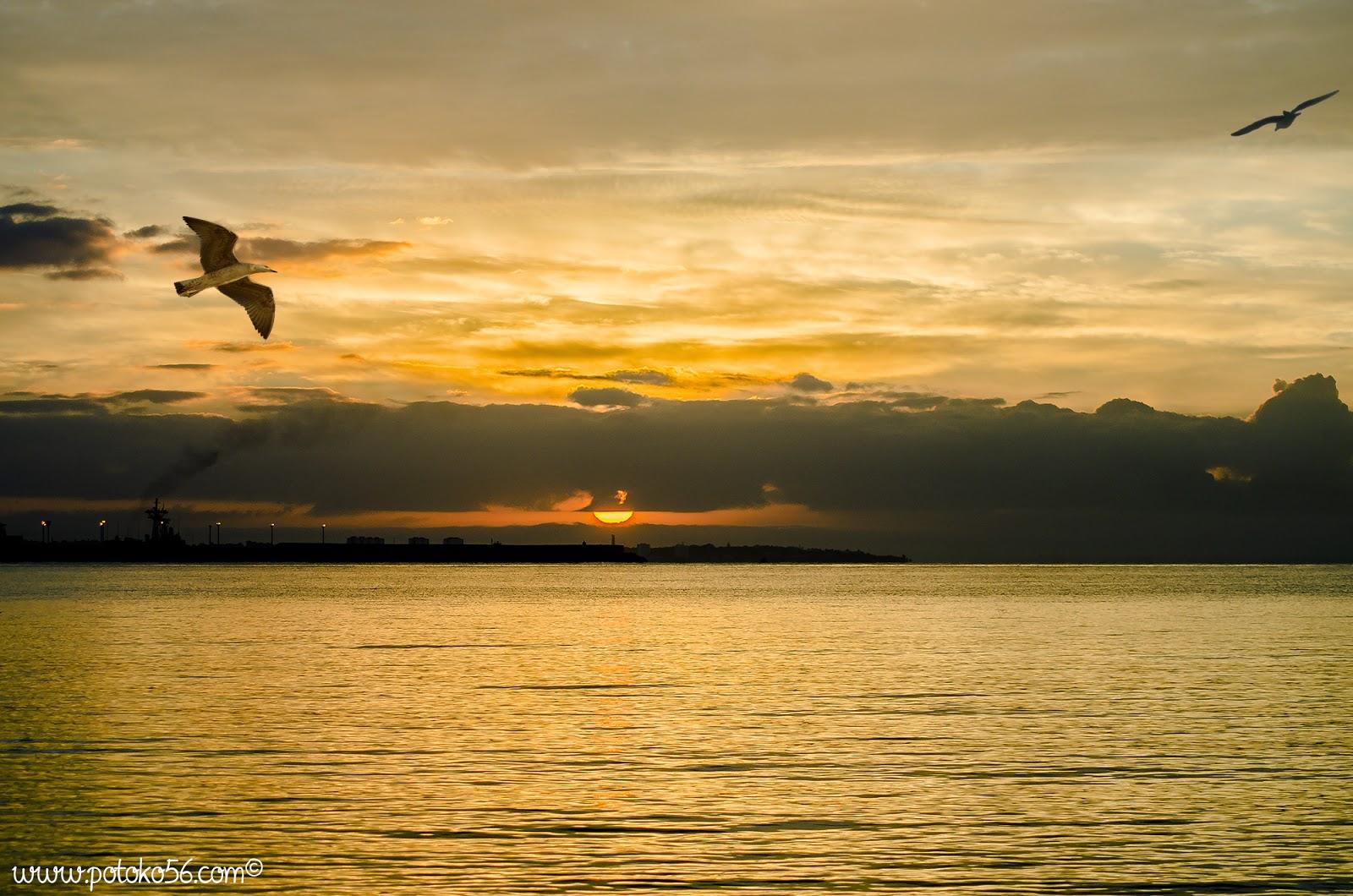 Rota amaneciendo desde la playa testigos las gaviotas