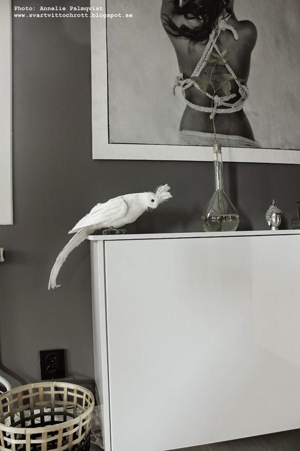 ikea köksskåp som möbel, möbler ikea, vägghängt, vitt, grått, vardagsrum, media, mediamöbel, papegoja, gråmålad vägg
