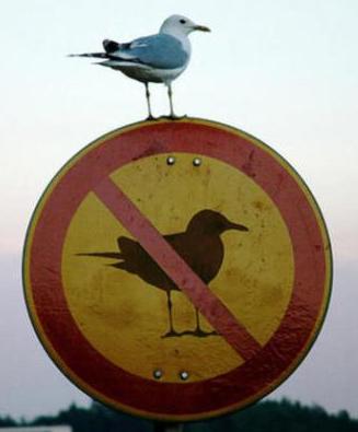 http://4.bp.blogspot.com/-SW1oNnHyPcQ/Tp2Pkf-U8aI/AAAAAAAAALk/sOkrngtW9vY/s1600/oiseau.png