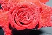 Flores - por Elder Prates