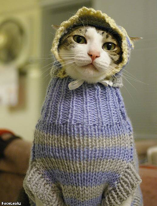 21 Foto Yang Harus Anda Lihat Setelah 21 Mei 2011 Berlalu - Kucing ini memakai sweater