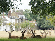 I live not ten minutes walk from Bushy Park, a lovely expanse of open space . (seated deer bushy park )