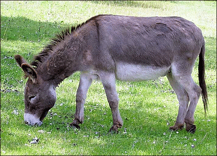 external image donkey.png