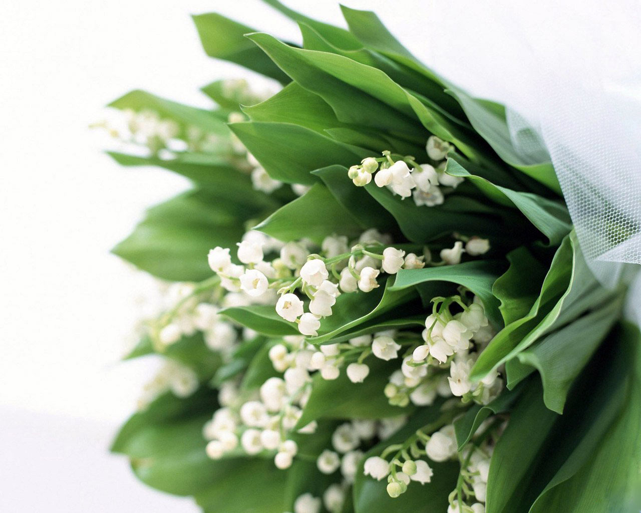 This Blog Really Stinks A Perfume Blog Lily Of The Valley May