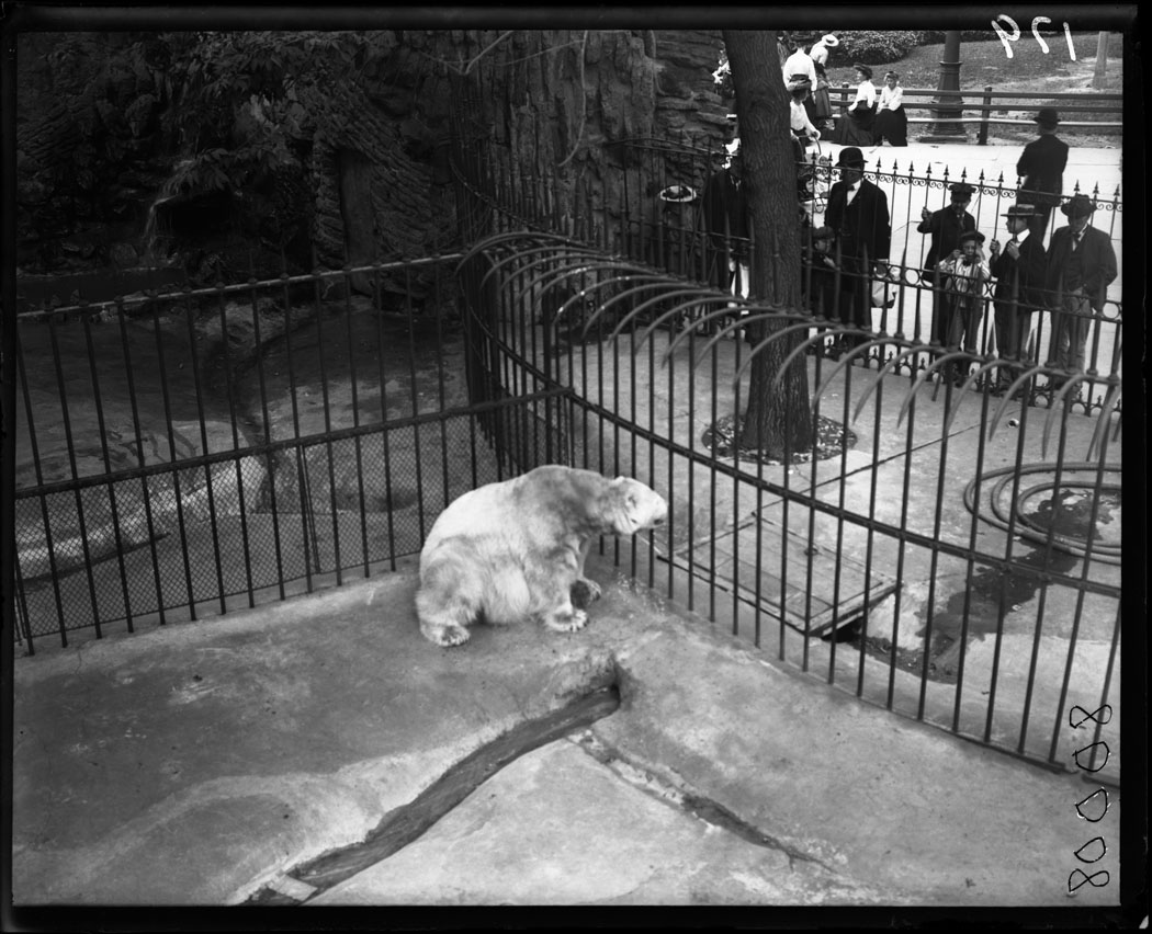 The Passion Of Former Days The Zoo 1900