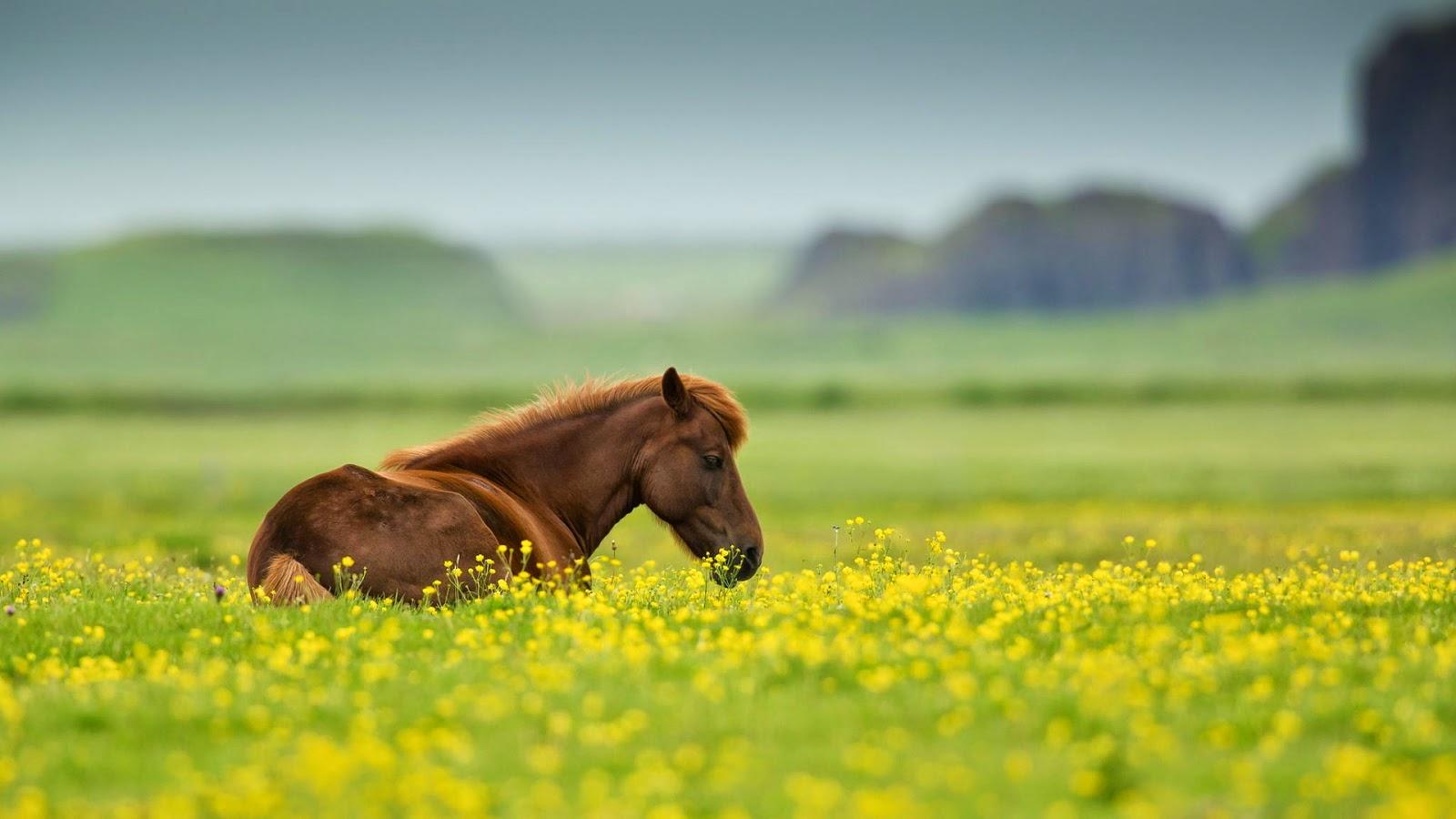 Most Inspiring   Wallpaper Horse Green - wxp%2B(30)  Best Photo Reference_939734.jpg