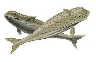 cetaceos prehistoricos de america Odobenocetops