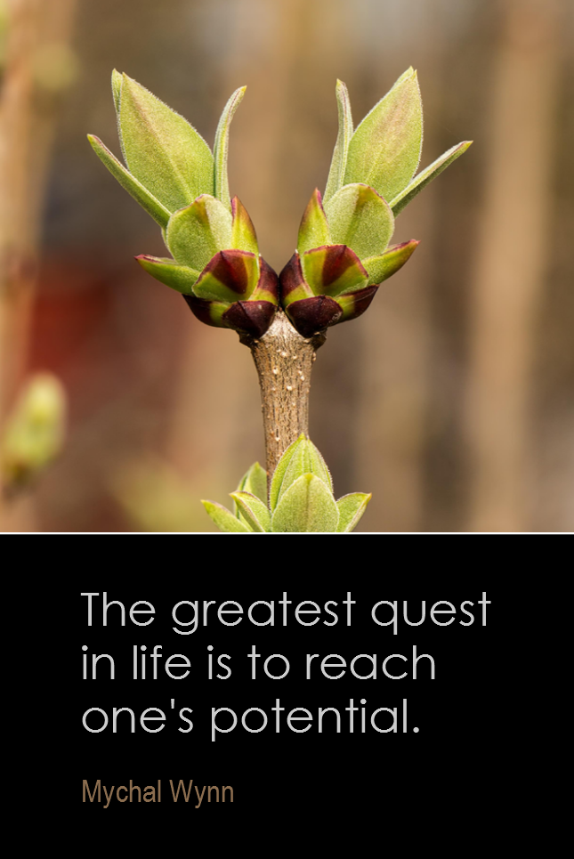 visual quote - image quotation for POTENTIAL - The greatest quest in life is to reach one's potential. - Mychal Wynn