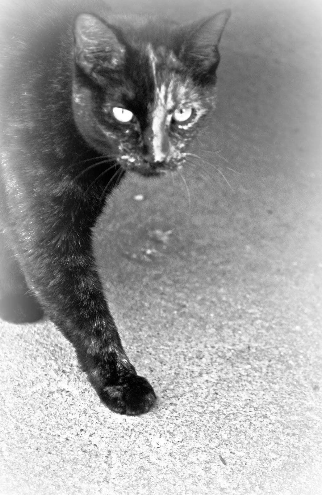 CJO Photo Cats Page 1