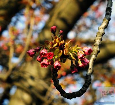floare copac gradina botanica bucuresti