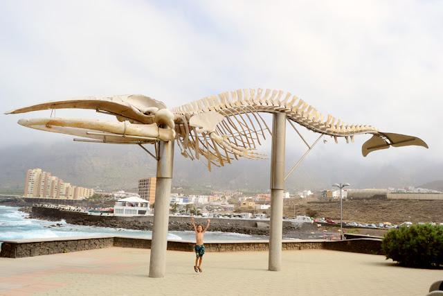 Esqueletos de ballenas