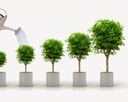 grow successful mentoring program