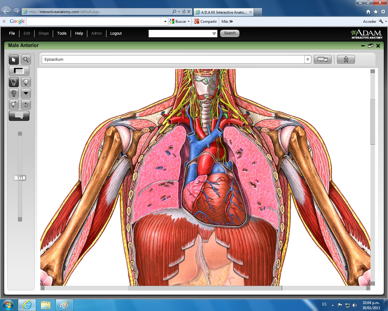 Resumen Del Sistema Circulatorio | sistema cardiovascular