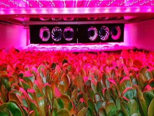 Công nghệ trồng rau không dùng đất và nước