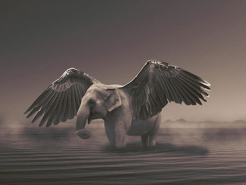 Amazing Animals Transformation Graphics Design Photos