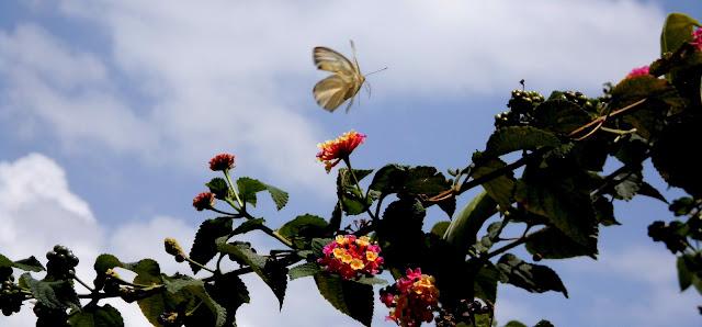 Mariposa en Vuelo