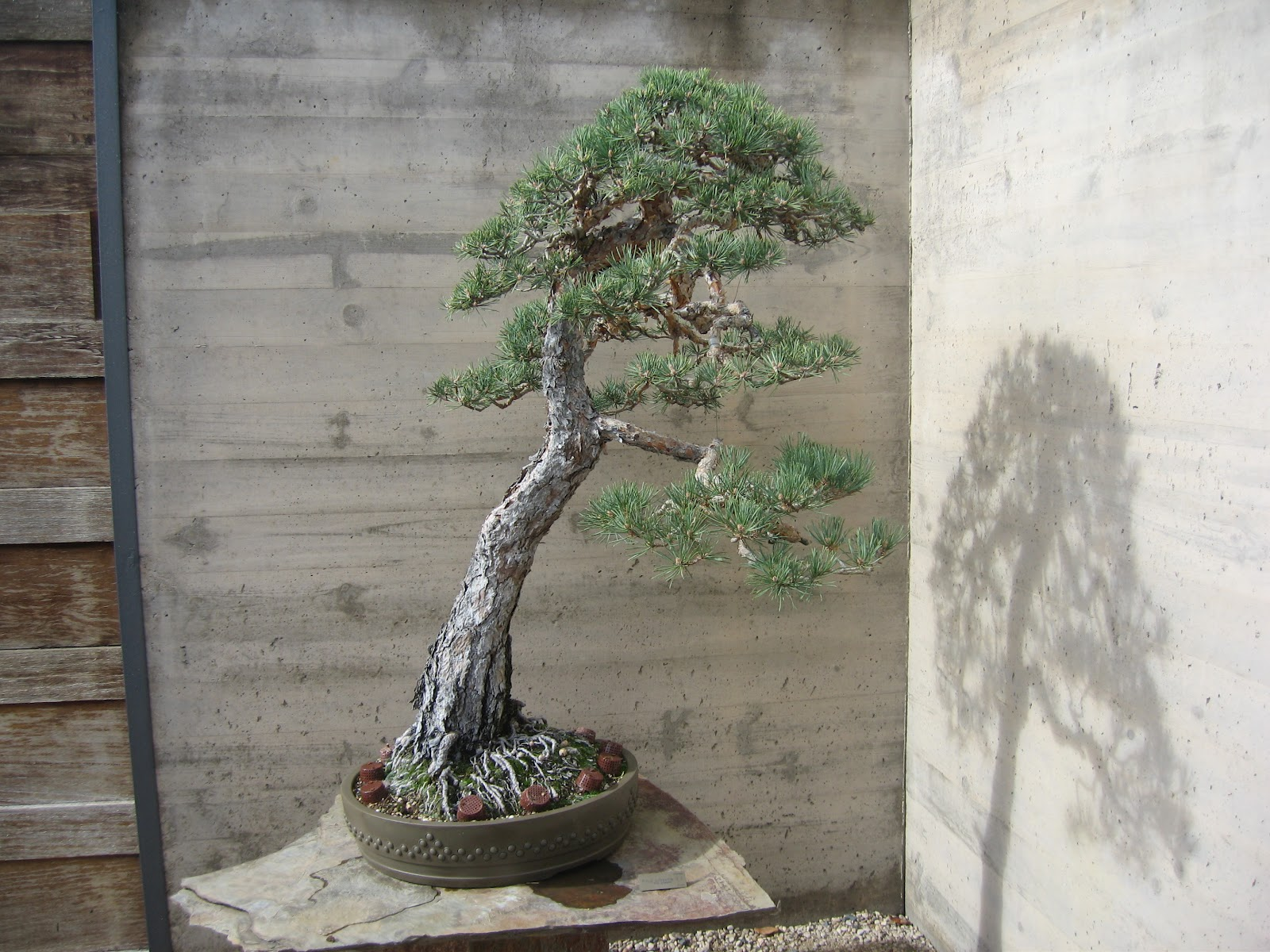 El tim bonsai dise o 18 for Vivero alcobendas