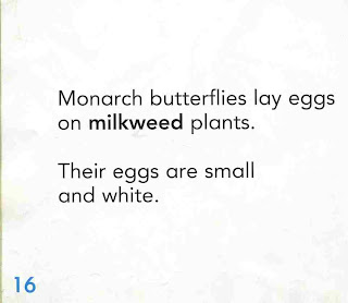 sample page #1 from  MONARCH BUTTERFLY  (Welcome Books: Animals of the World)  by Edana Eckart