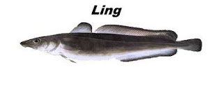 Peixe tipo bacalhau Ling