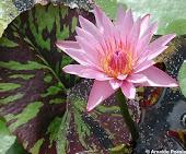 Florindo no amor Universal!