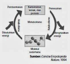 Pengertian Metabolisme Protein
