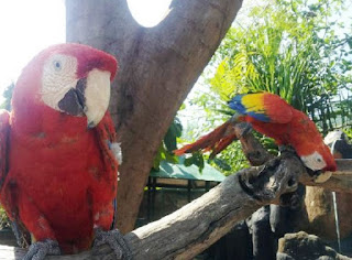 burung betet di taman burung meno