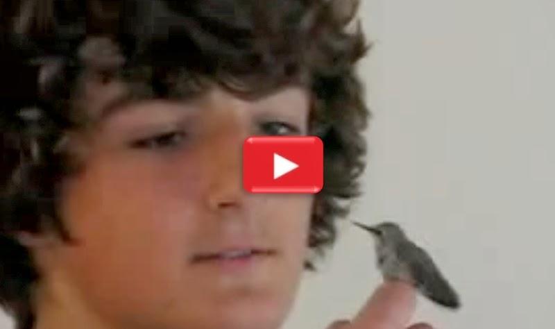 Watch online sex video clip in Sydney