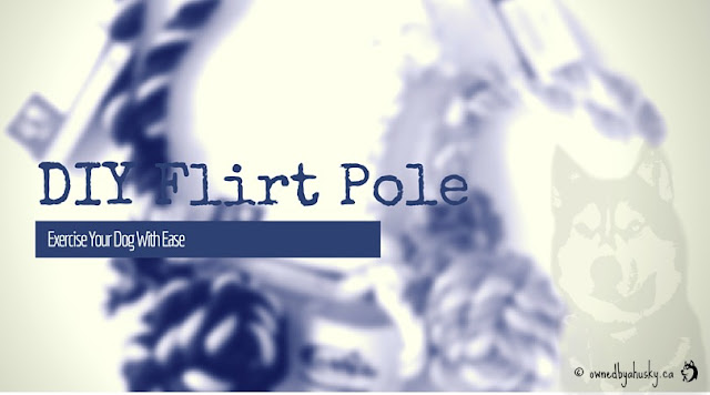 Exercise Your Dog With Ease With This DIY Flirt Pole Project