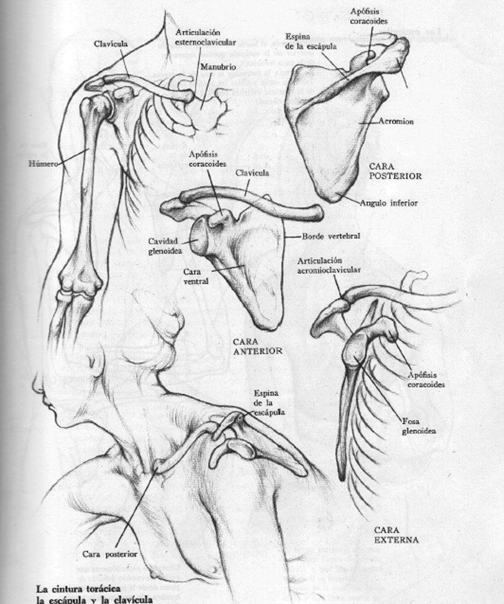 Human Figure Drawing Methods: Female Anatomy Back Bones Drawing
