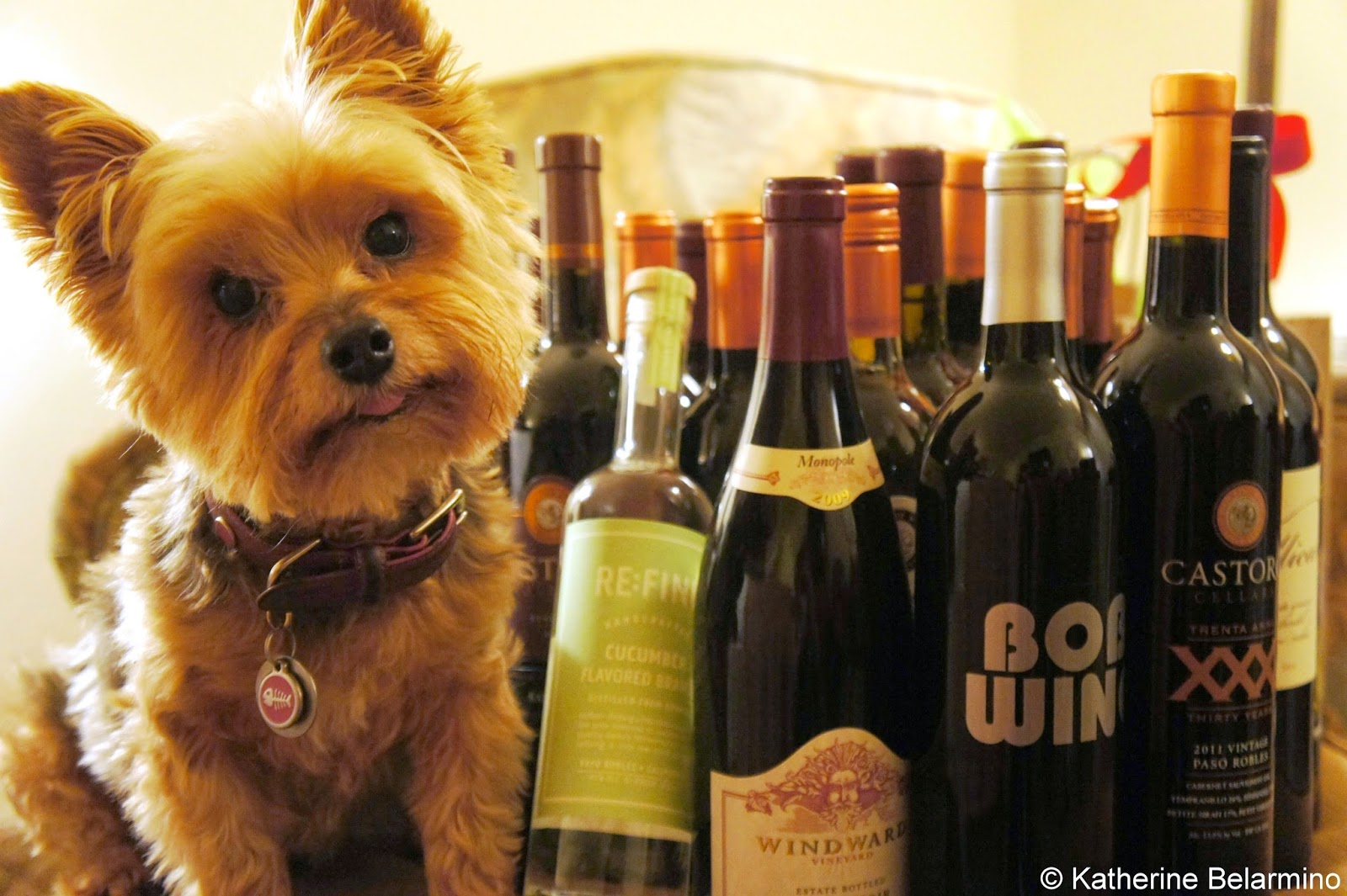 Paso Robles Dog Friendly Wineries