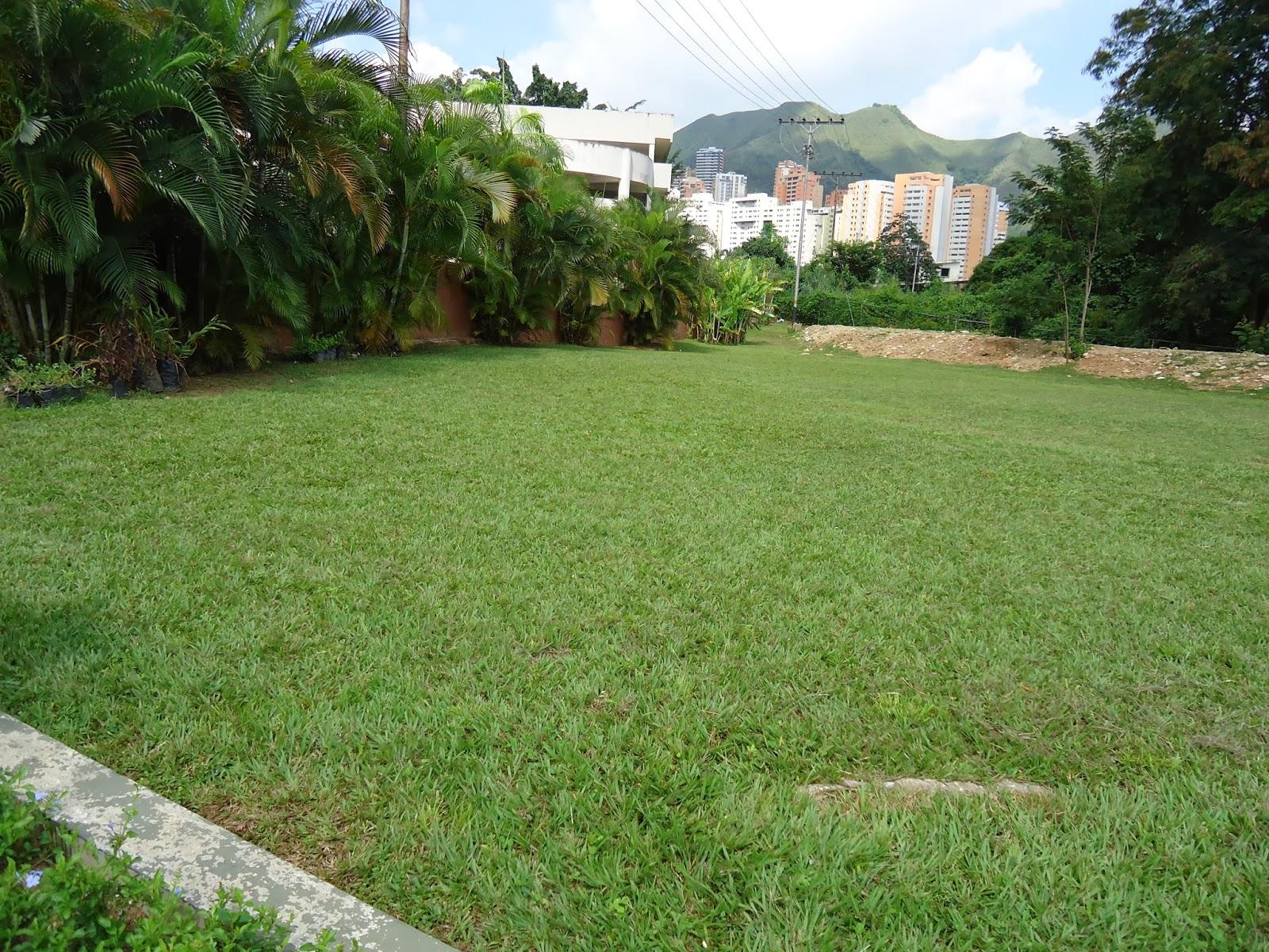 Jard n bamb c a asociaci n de ejecutivos del estado for Jardin bambu