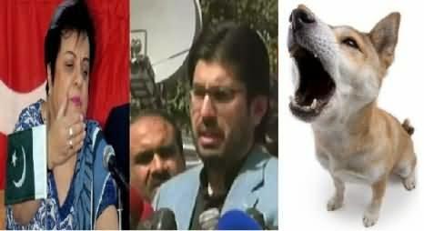 arsalan iftikhar is a barking dog shireen mazari