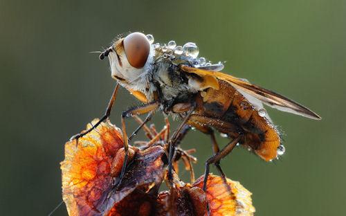 Mariposas, arañas, bichos y escarabajos (insectos)
