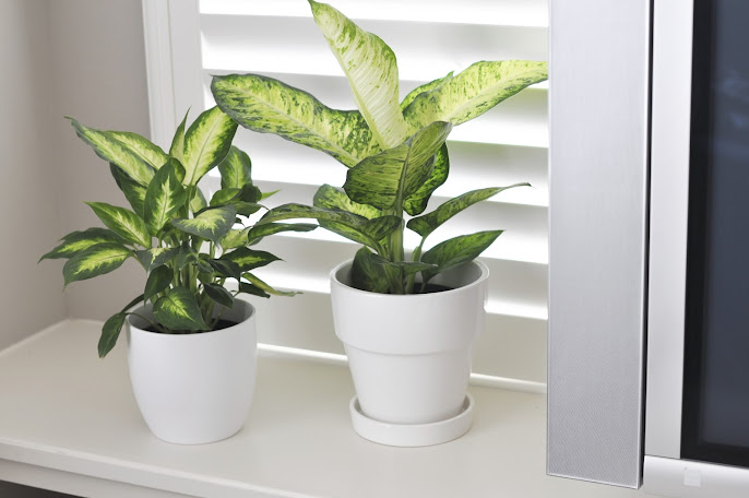 #2 Indoor Plants Decoration Ideas