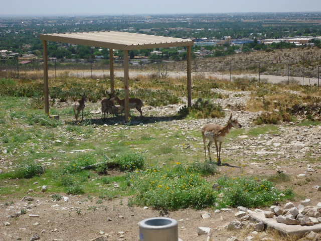 O Jo 39 S Road Trips 2009 2011 Living Desert Zoo Gardens