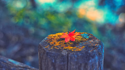 photo-leaf-wood-autumn-wallpaper-1920x1080
