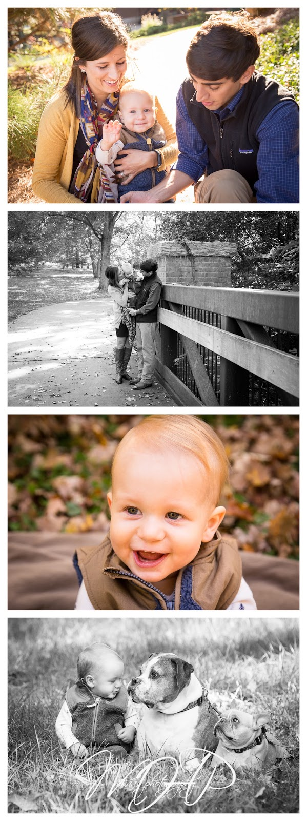 Louisville, KY Family Photos, 1 year old boy, Louisville Family Photographer, MHaas Photography, MHPFamilies, toddler, child photographer, Dogs,