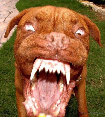 Pitbulls Dog Namesfree Fooddesigner Harnesses For Small Dogsrottweiler Pitbull Mix