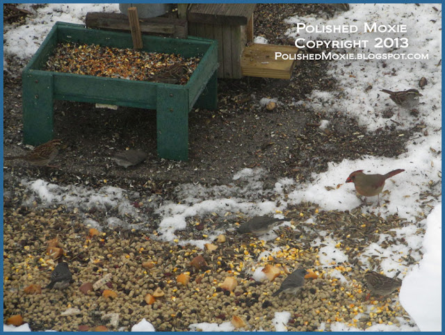 Picture of many birds at ground feeder in the snow.