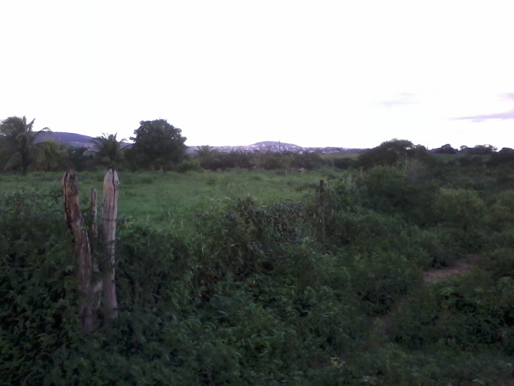 SERRINHA:O ENCANTO DA ZONA RURAL(Floresta)